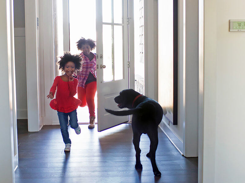 Children run through the front door as dog wags its' tail in excitement